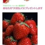 懸賞ブログ_3/8 懸賞情報 いちごプレゼント