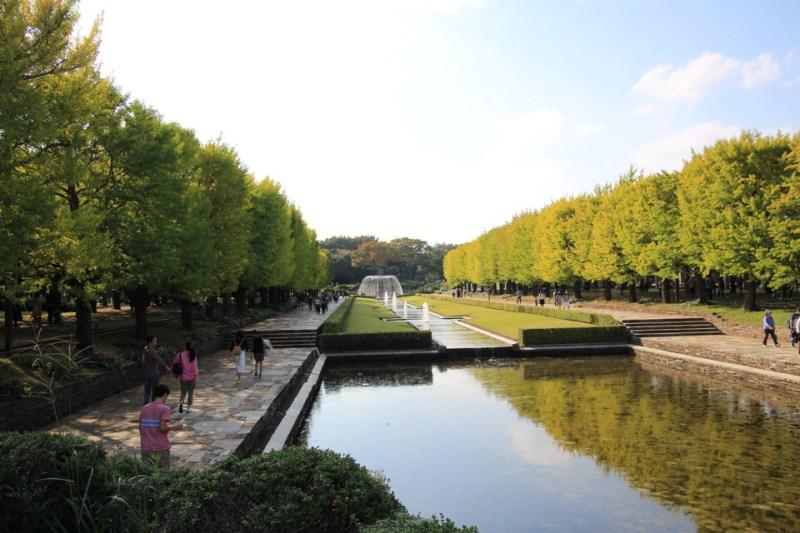 昭和記念公園のコスモス-Japan Nomad (8)