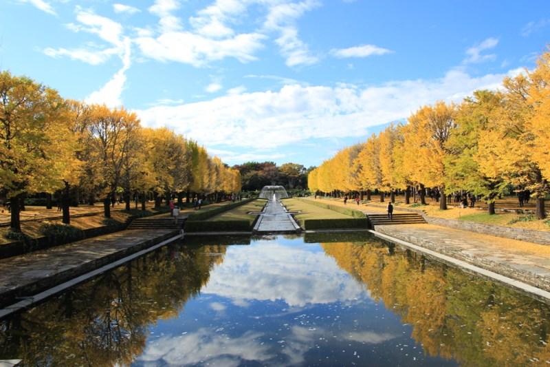 昭和記念公園の紅葉-Japan Nomad (7)
