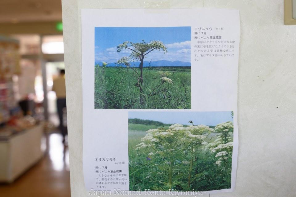 自転車日本一周90日目(発熱)-Japan Nomad (8)