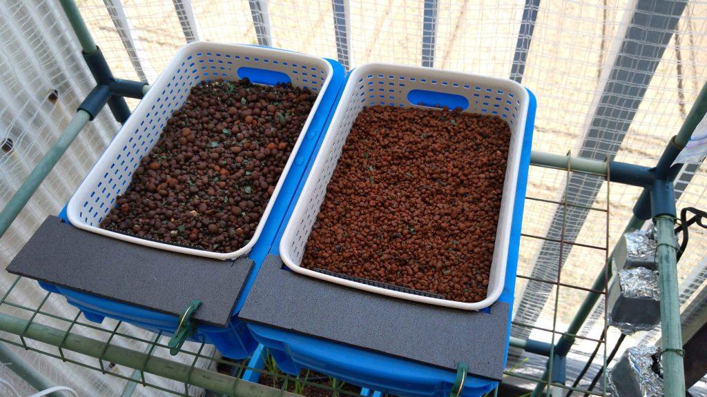 ハイドロカルチャーでニラを栽培するための装置作成 設置