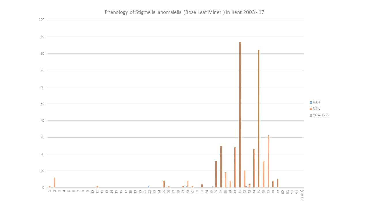 hight resolution of  1280 720 in phenology stigmella anomalella rose leaf
