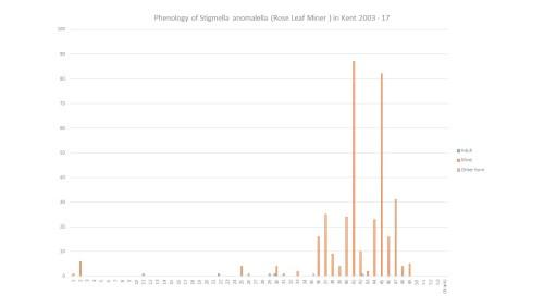 small resolution of  1280 720 in phenology stigmella anomalella rose leaf