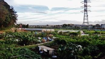 5. Hidden Farm Vaelly - Chiba Hanami River 2