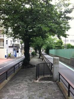 Tachiaigawa green road Meguro-ku canal tree path detail