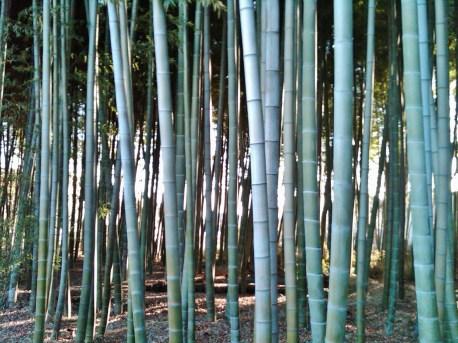 Chofu Tokyo bamboo grove near Nogawa river
