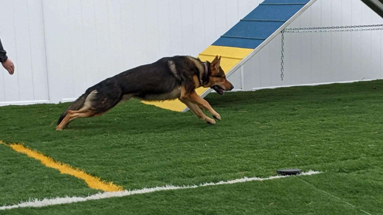 union ky dog training