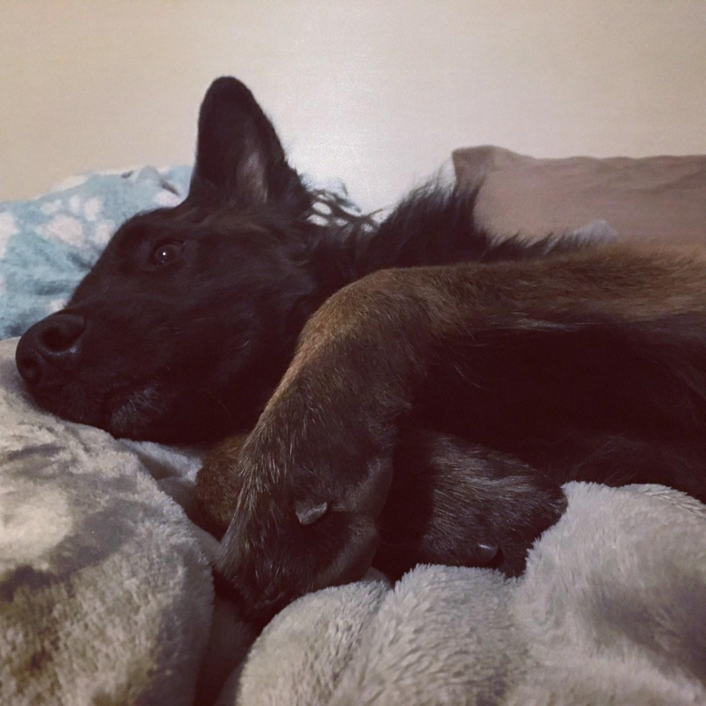 Dog-sleeping