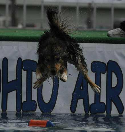 dog dock diving united air dogs