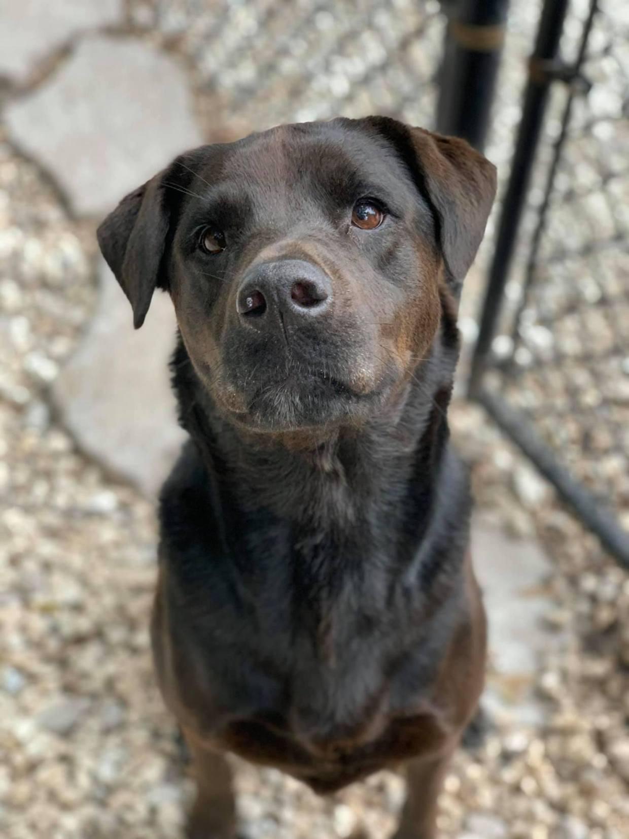 Professional Dog Training Success Story | Dixie