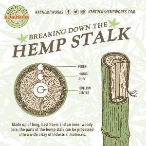 Breaking down the hemp stalk