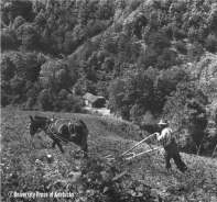 In early spring a mountain man and his long-eared mule plow the sleepy soil that will be planted to corn, 'taters, and beans. [Breathitt County, Kentucky, 1942.]