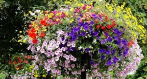 Festival Of Flowers ~ And the Winners Are …