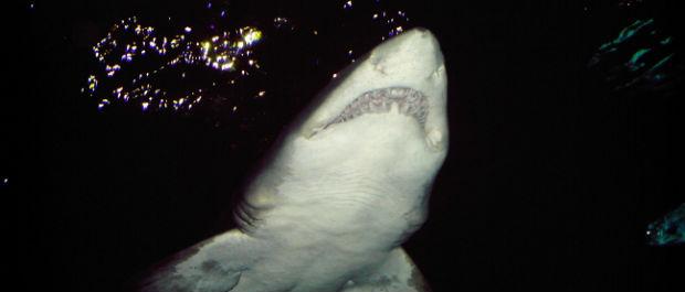 Sharks-Economic-Godsend