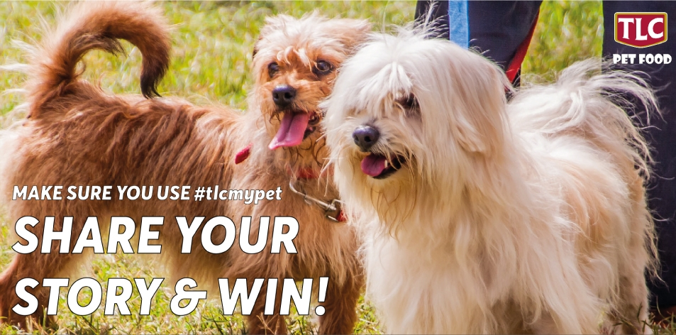 H&S Play & Win- TLC Pet Food- What makes your Pet Special?