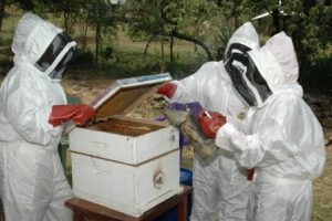 Schools, Colleges & Universities offering Apiculture Certificate Course in Kenya, Intake, Application, Admission, Registration, Contacts, School Fees