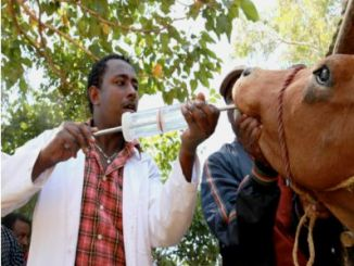 College offering Artificial insemination Certificate Course in Kenya