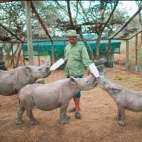 Schools, Colleges & Universities offering Certificate Higher Diploma and Diploma in Community Wildlife Management Course in Kenya Wildlife Service Training Institute, KWSTI Naivasha Kenya, Intake, Application, Admission, Registration, Contacts, School Fees, Jobs, Vacancies