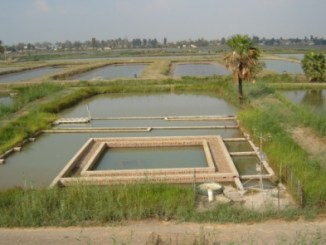 Colleges offering Certificate & Diploma in Fish Pond Construction & Management
