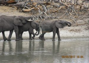 10 Days Kenya & Tanzania Classic Safari holiday