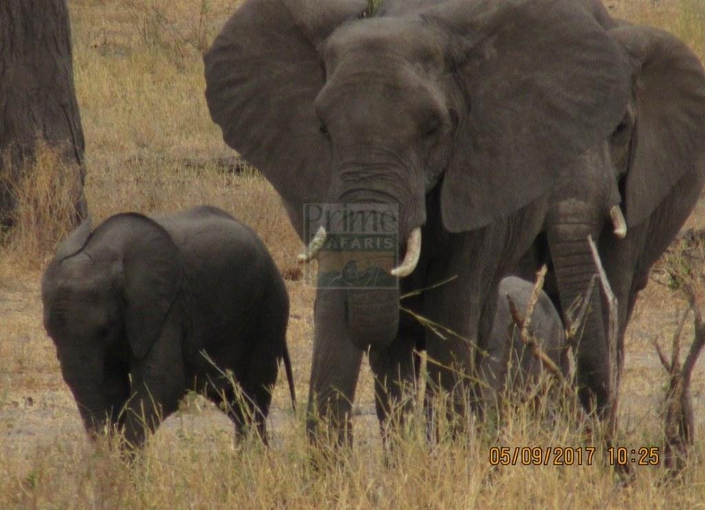 Masaai Mara National Reserve Kenya