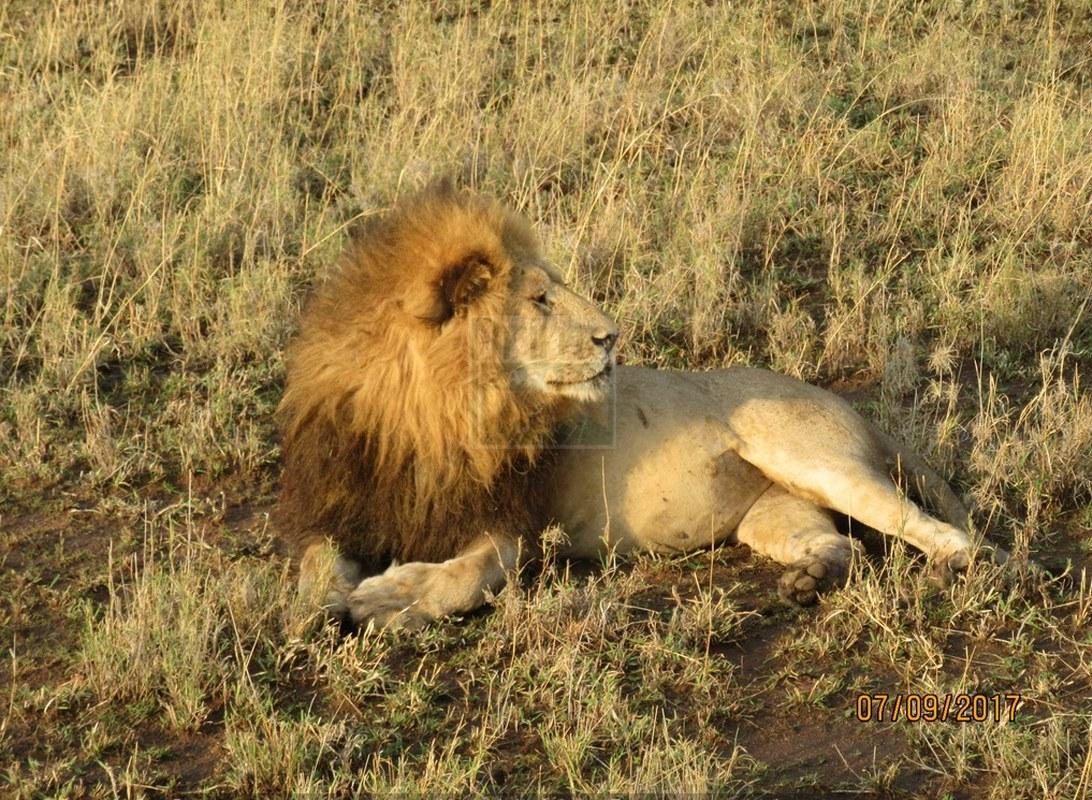 Ruma National Park Kenya
