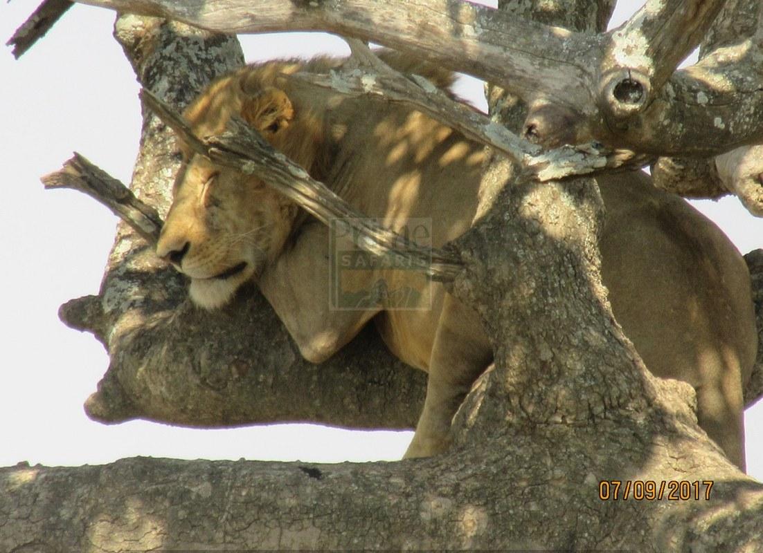 Aberdare National Park In Kenya