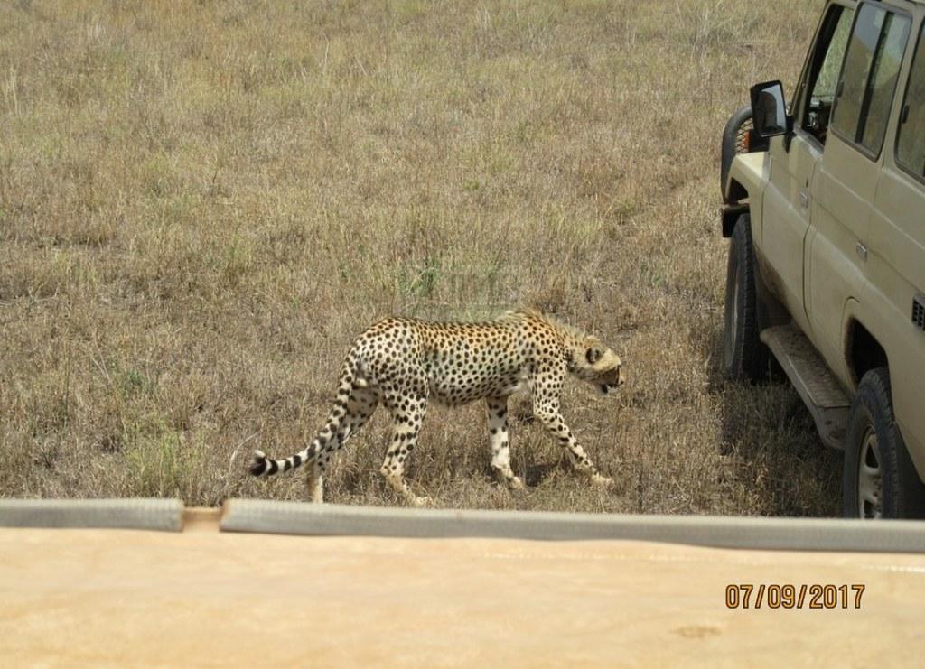10 Days Maasai Mara Kenya Safari - Lewa & Meru Safari Destinations Tour