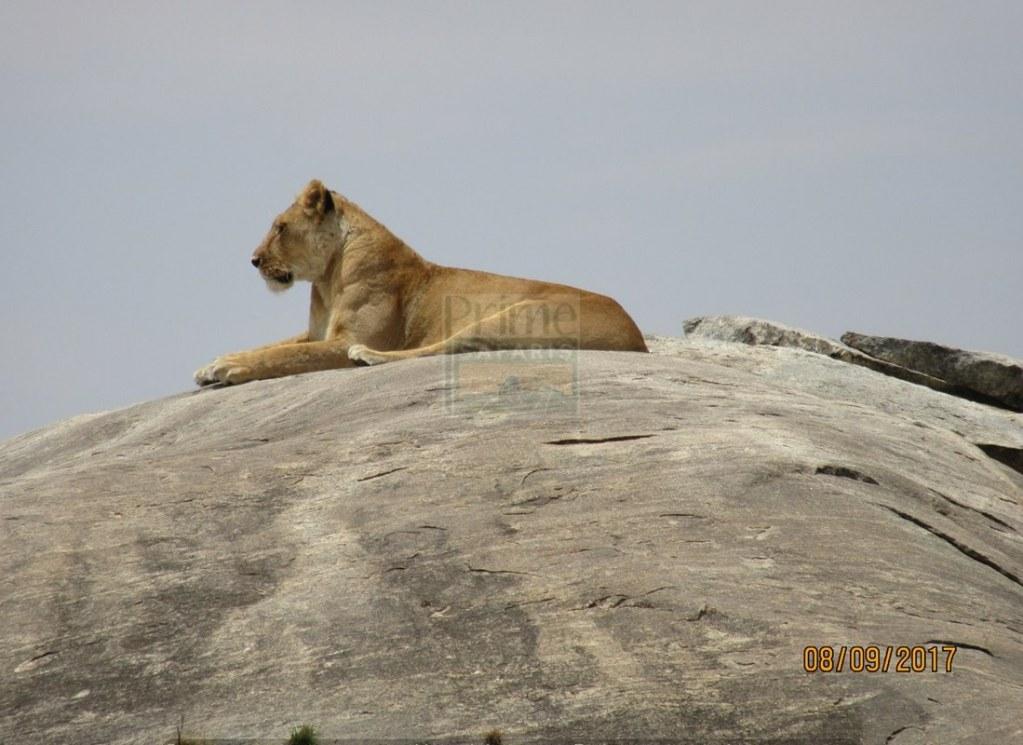 7 Days Maasai Mara Kenya Safari - Meru National Park Tour