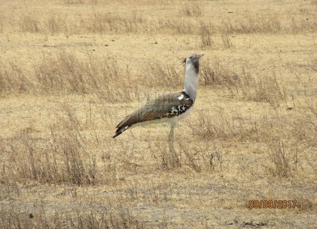 3 Days Kenya Safari Wildlife in Amboseli National Park