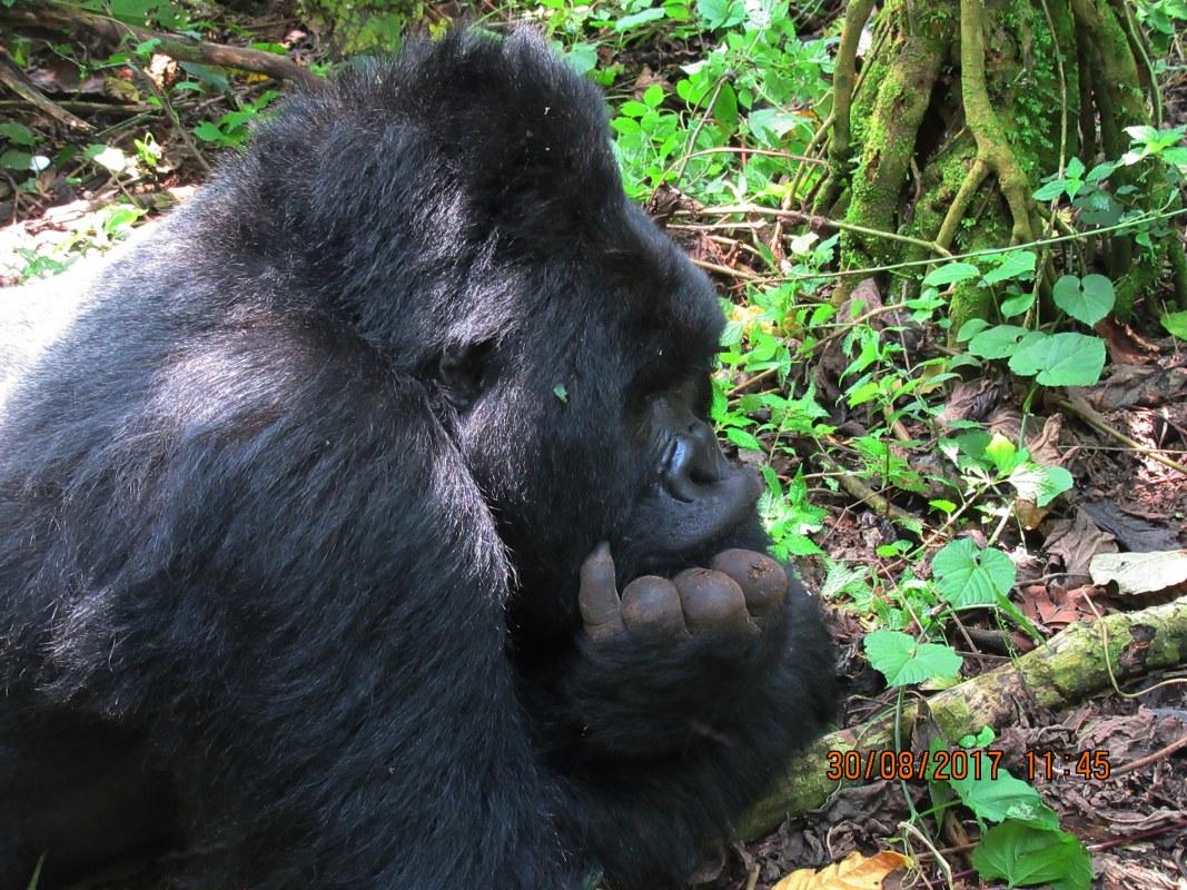 4 Days Rwanda Gorilla Safari & Bisoke Volcano Hiking