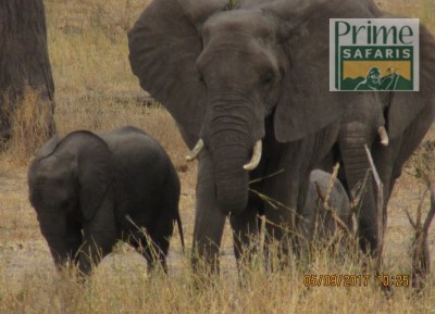 9 Days Kenya Tanzania Predator Safari Tour