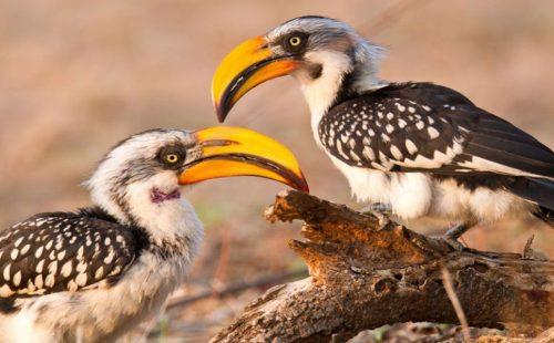 Birding Arabuko-Sokoke Forest National park