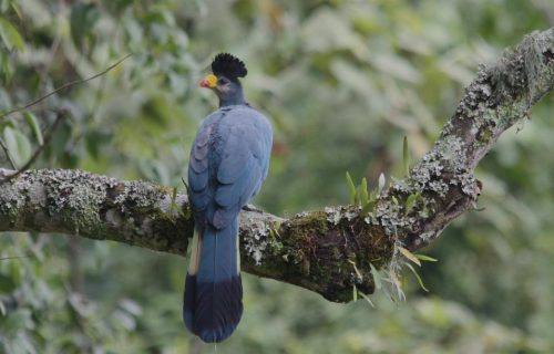 Birding in Bwindi Impenetrable Forest
