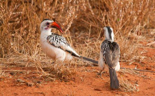 Birdlife in Tsavo East National Park