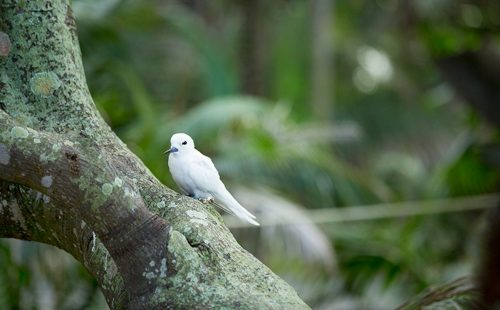 Central Island National Park Bird Watching