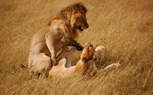 Cultural Walk in Maasai Mara National Reserve