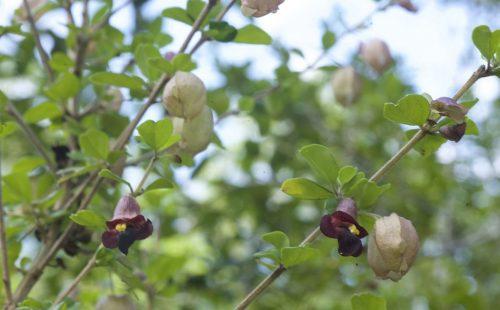 Plants in Aruboke-Sokoke Forest