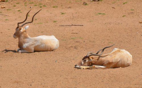 Wildlife Malka Mari National Park Kenya