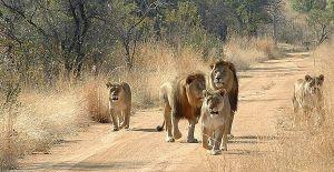 10 Days Kenya Tanzania Wildlife Safari Tour