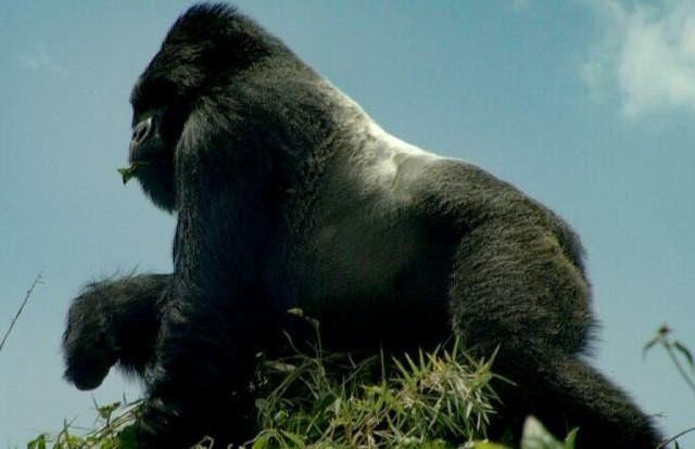 7 Days Uganda Kenya Gorilla & Big 5 Safari - Kenya Safaris Tours