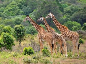 2 Days Tanzania Safari to Lake Manyara National Park