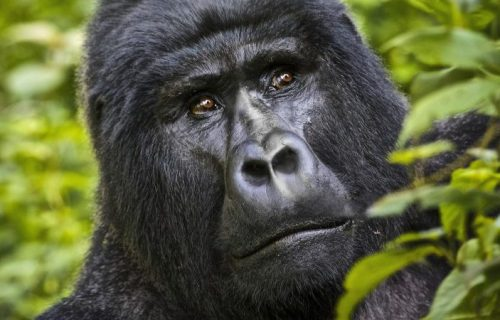 7 Days Culture Safari in Uganda with Gorilla trekking