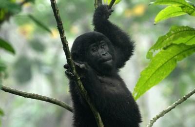 9 Days Uganda Kenya Tanzania Gorilla & Big 5 Safari
