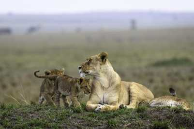 Big Cats and Small Creatures of Masai Mara
