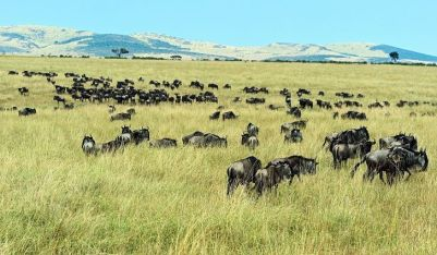 Open Plains of Serengeti National Park