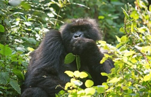 Primate, Wildlife & Mountaineering Safari