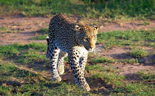 Wild game in Mount Kenya National Park.