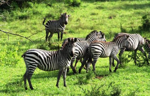 Wildlife Safari in Uganda; 2 Days