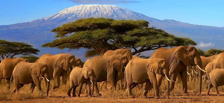 Best Tour Operators And Travel Agencies In Kenya Nairobi